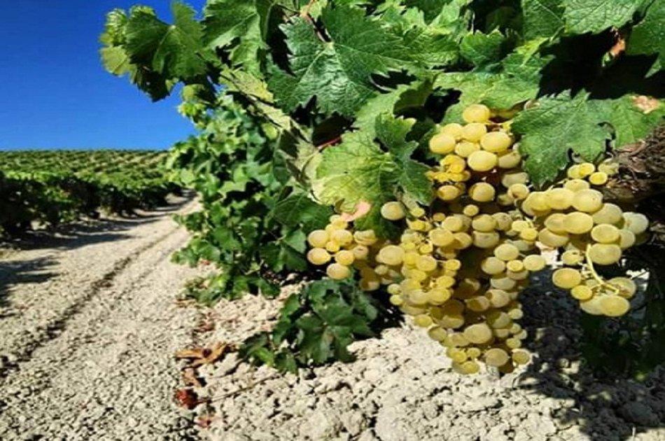 Sensory Wine Tasting in Jerez