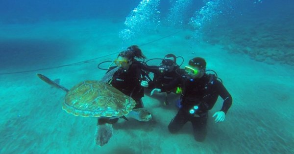 Try dive 20 minutes for beginners in Los Cristianos