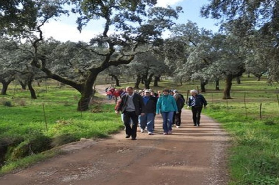 Visit a Pig Farm in Jabugo and Dehesa From Seville