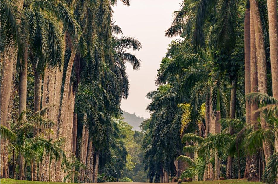3 Day Wonder Island Tour of Sri Lanka