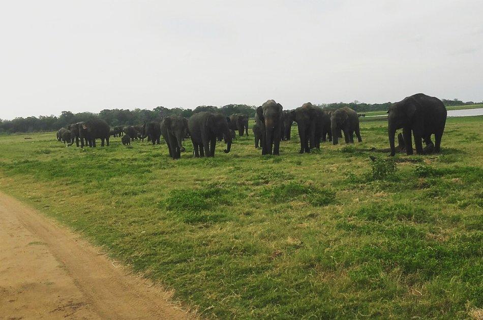 Elephant Explorer Tour From Kandy