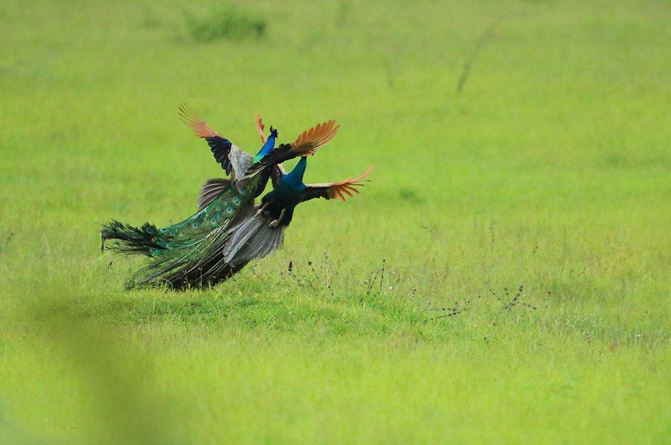 Private Safari: Bundala  National Park