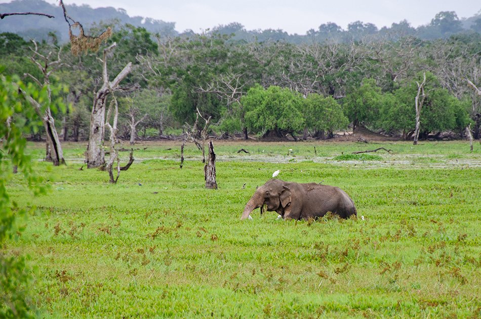Private Safari: Kumana  National Park