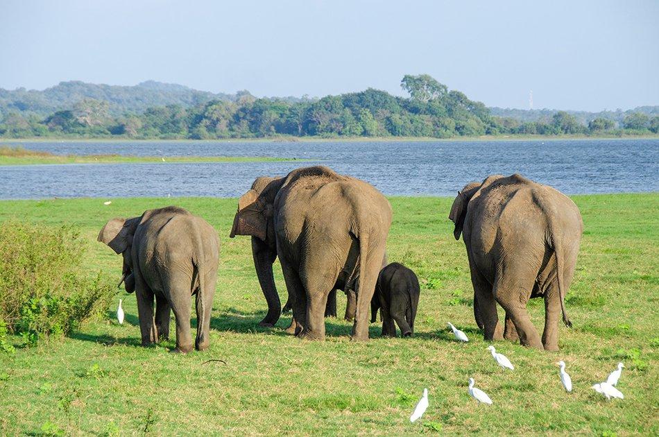 Private Safari: Minneriya National Park