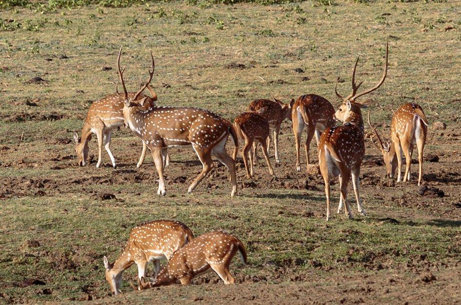 Private Safari: Udawalawe National Park