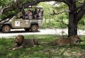 1 Day Selous Game Reserve Safari Tanzania
