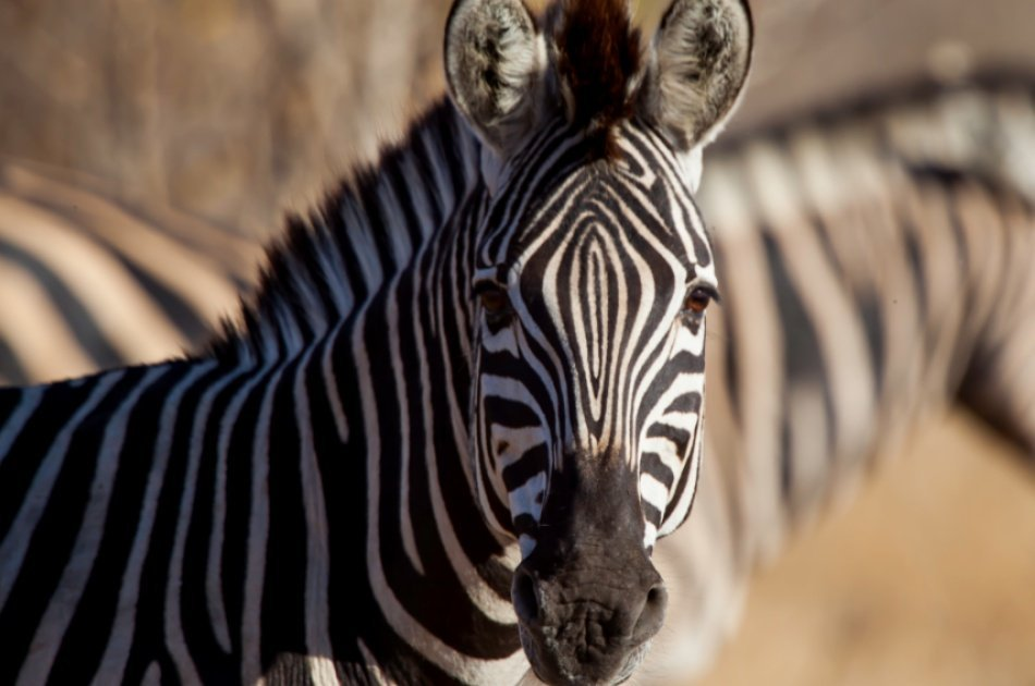 14 Days Kilimanjaro Trek, Marangu Route & Camping Safaris