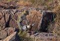2 Days Safari Lake Manyara National Park/Ngorongoro Crater