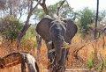 3 Days/2 Nights Safari to Lake Manyara/Ngorongoro Crater/Tarangire National Park