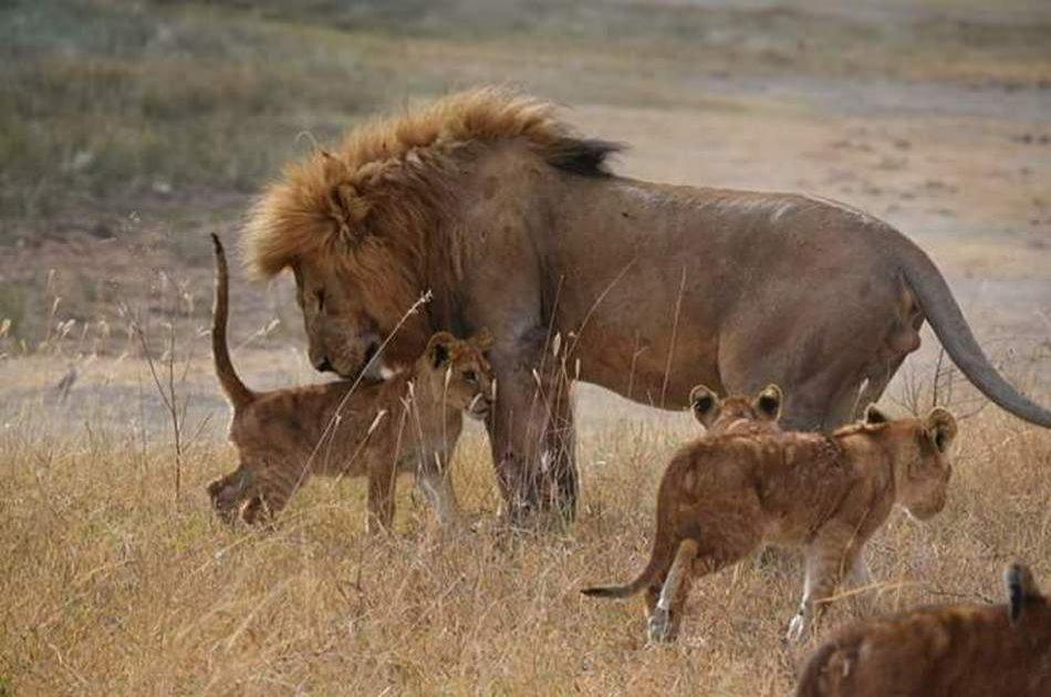 4 Day Camping Safari Group Join in Tanzania