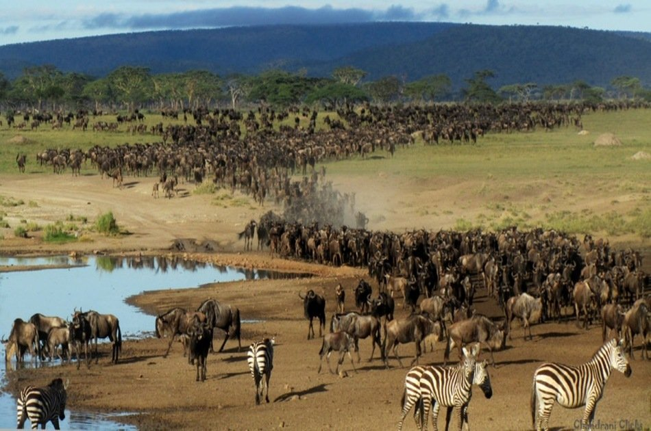 4-Day The Great Wildebeest Calving Migration Safari
