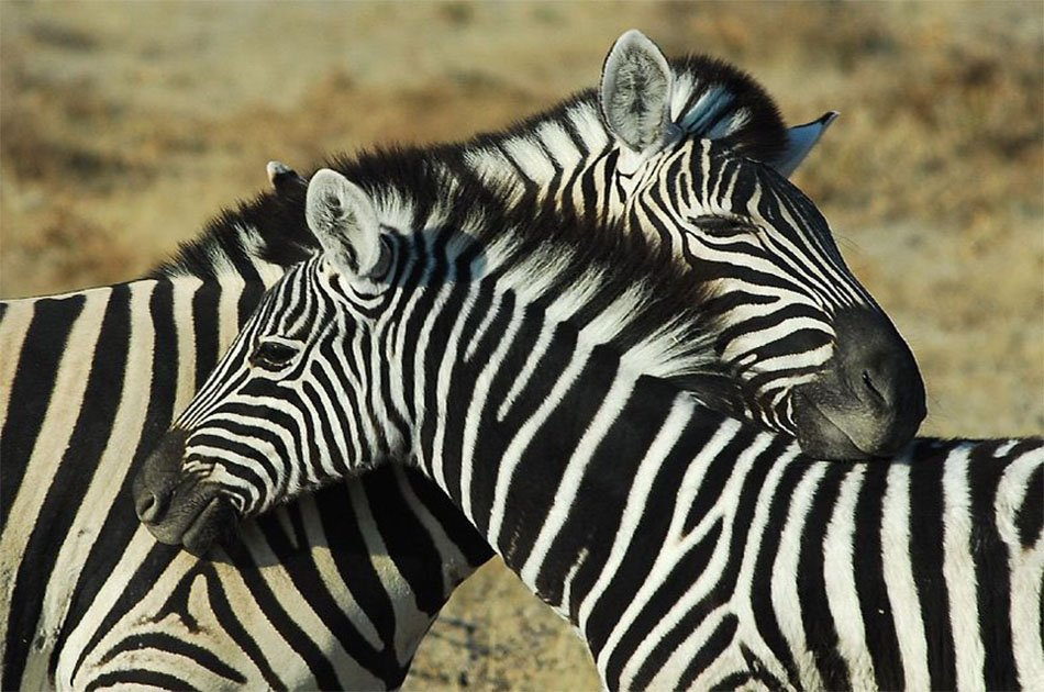 4 Days from Masai Mara Kenya Via Isebania Border/Serengeti/Ngorongoro/Arusha