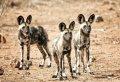 4 Days Safari Lake Manyara/Serengeti National Park/Ngorongoro Crater