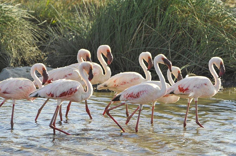 5 Days Safari in Lake Manyara/Serengeti Plains/Ngorongoro Crater
