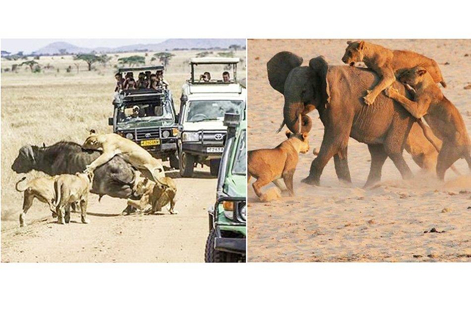 """6 Day """"Big 5"""" Safari"""