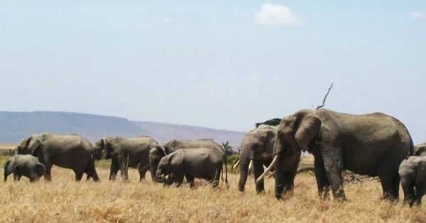 "6 Day ""Big 5"" Safari"