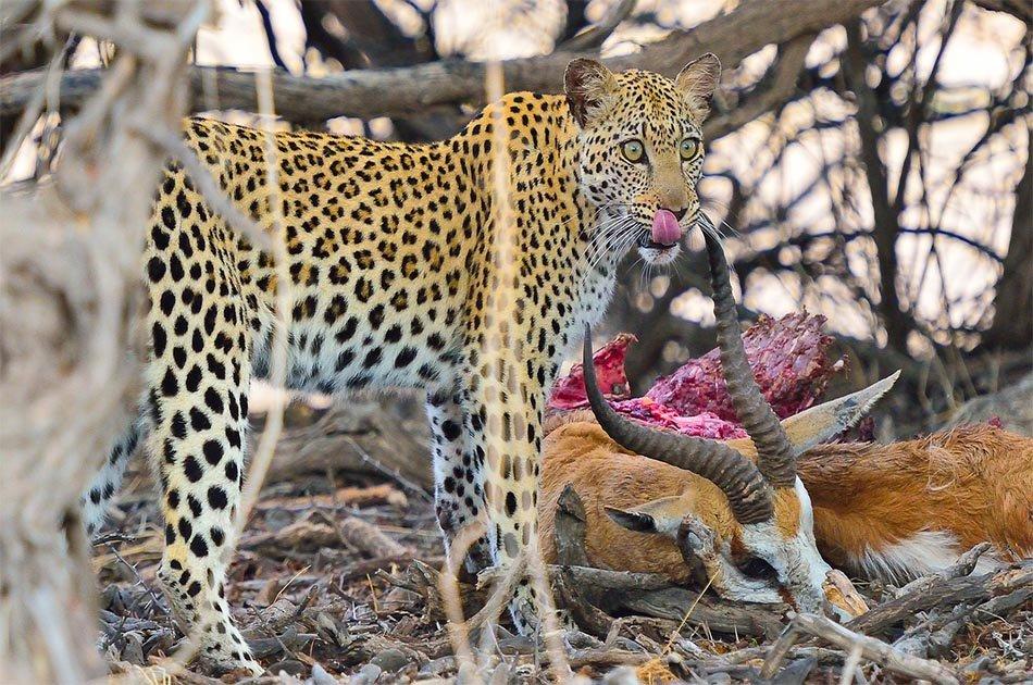 6 Days Safari Lake Manyara/Serengeti Plains/Ngorongoro Crater/Tarangire Park