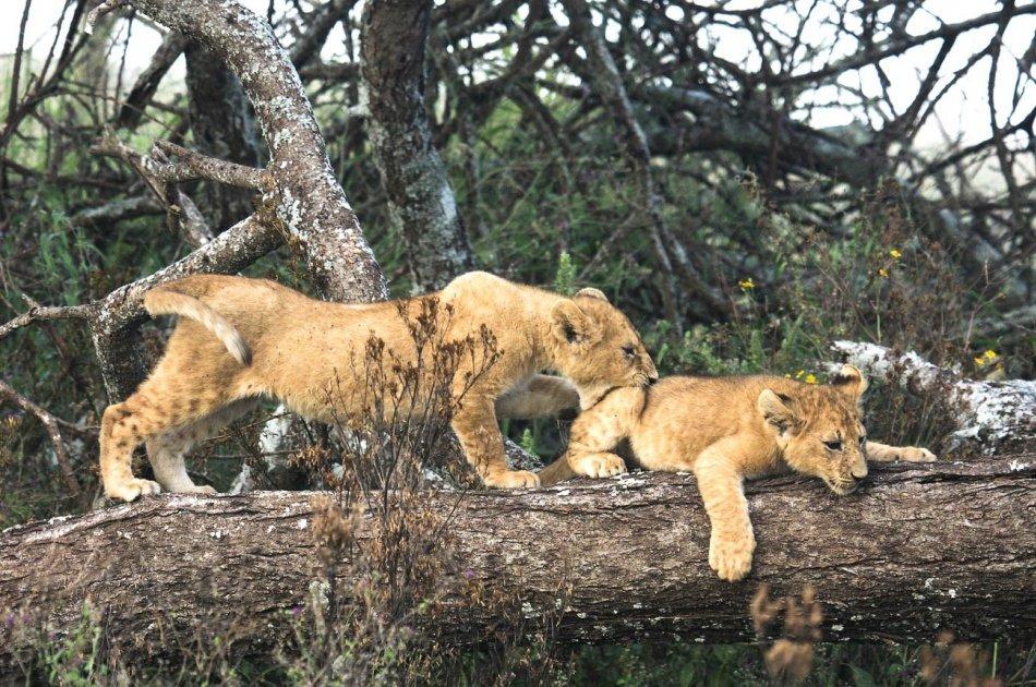 6 Days Tarangire,Ngorongoro Crater & Serengeti Group  Safaris