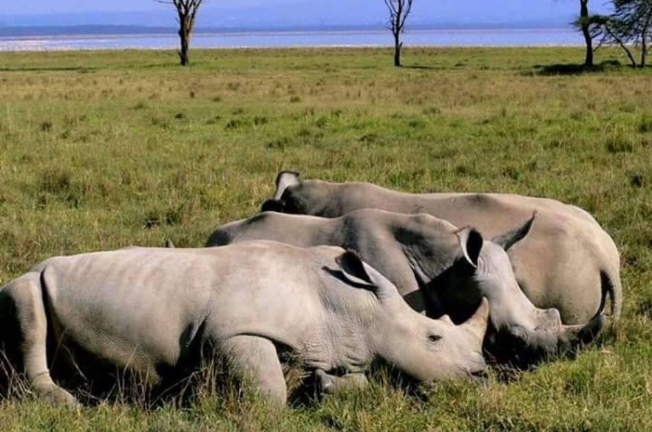 8-Days Authentic Small Group Tanzania Safari