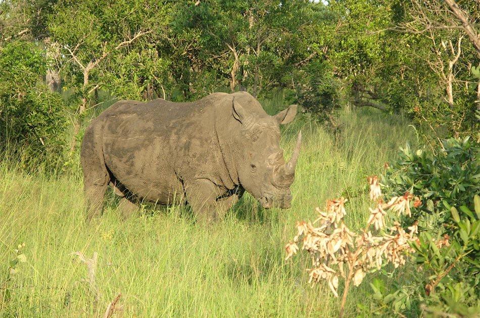 8 Days Cultural Safari Lake Manyara/ Serengeti/Ngorongoro/Lake Eyasi/Tarangire