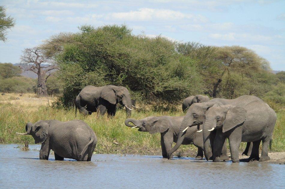 8 Days to Experience Tanzania Treasures