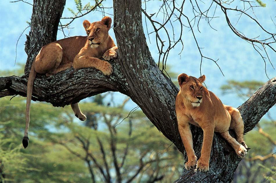 9 Days/8 Nights Safari – Lake Ndutu/Serengeti National Park/Ngorongoro Crater