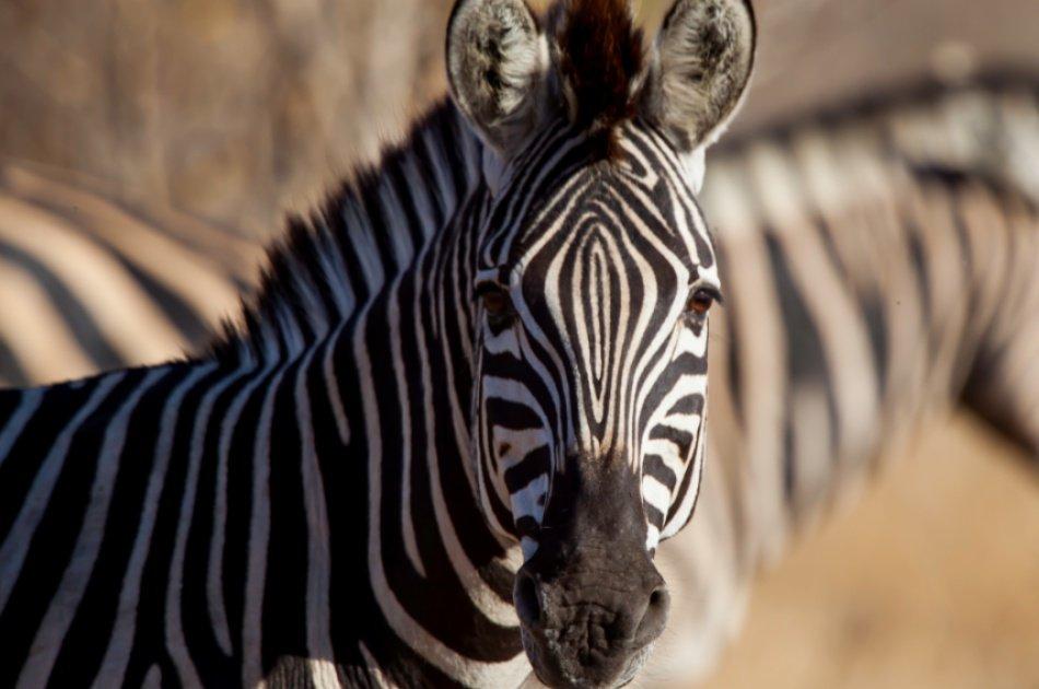 9 Days – Northern Circuit Small Group Safari -Tanzania