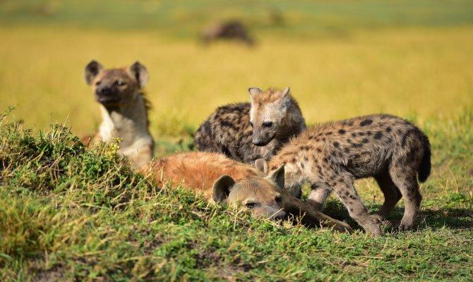 Serengeti Migration Safari & Zanzibal Island Tour