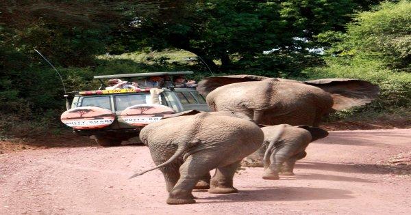 6-Day Tanzania's Big Five Safaris