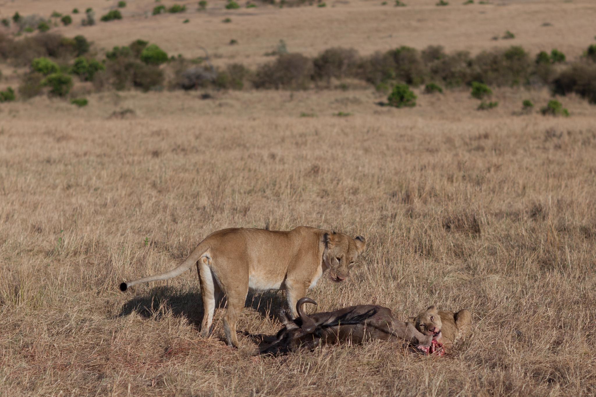 4 Days Manyara Serengeti Ngorongoro Safari Tour