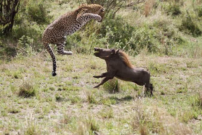 Safari Tour, Kilimanjaro Climb, Gorilla Trek and Zanzibar BEACHES