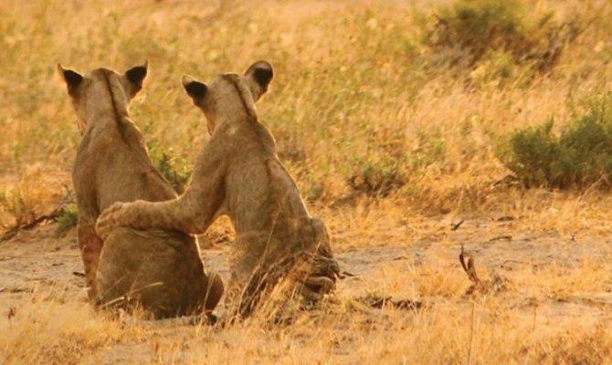 Luxury safari in Northern circuit in Tanzania