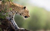 7 days - 6 nights Lodging & Camping  Safari,