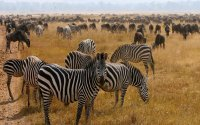 6-Day Tanzania's Big Five Safaris