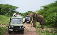 7 Day Tanzania Safari Special for All