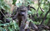 Deluxe Safari: Discovery Wildlife Escapes June - December 2017