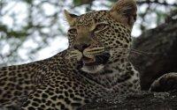 Tanzania Wildlife and Cultural Highlights