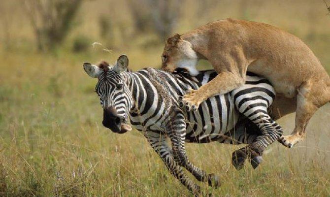 Unforgettable 5 Days Serengeti Safari Tours