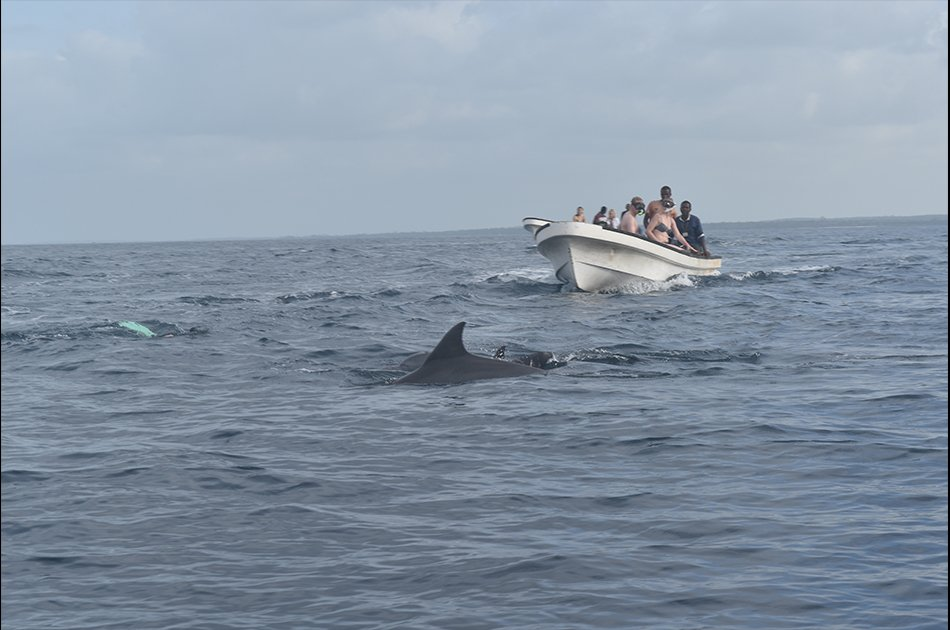 Dolphin Half Day Tour from Zanzibar