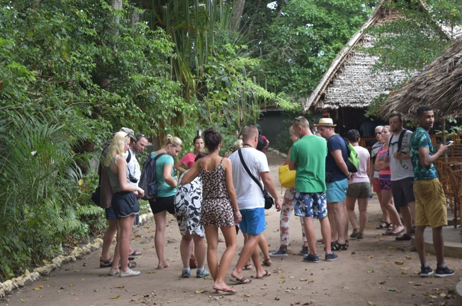 Experience Jozani Forest on a 3 Hr Safari Tour in Zanzibar