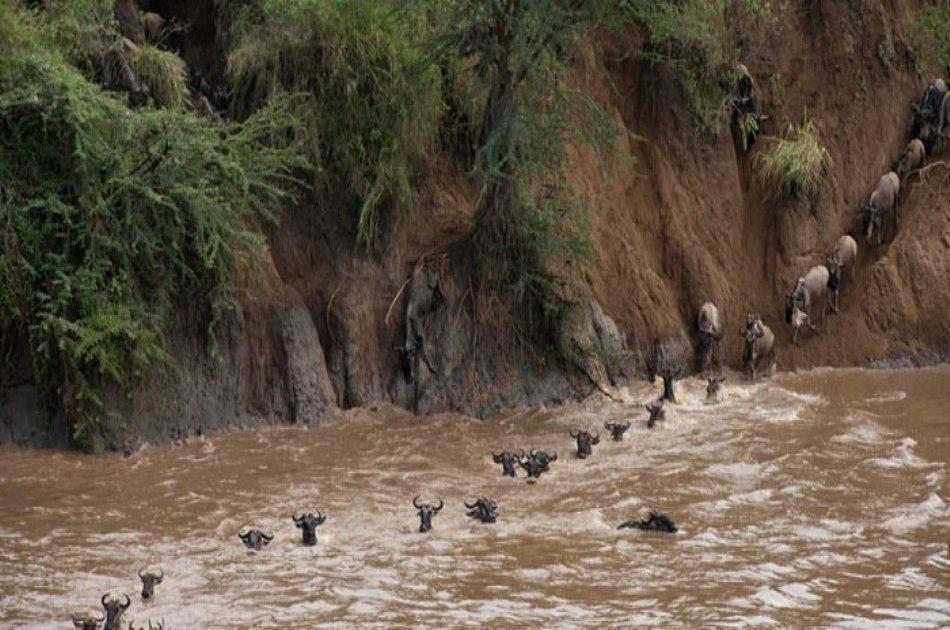 Kenya & Tanzania Safari Adventure - 11 Days