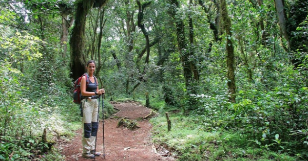 Mount Kilimanjaro Day Trek