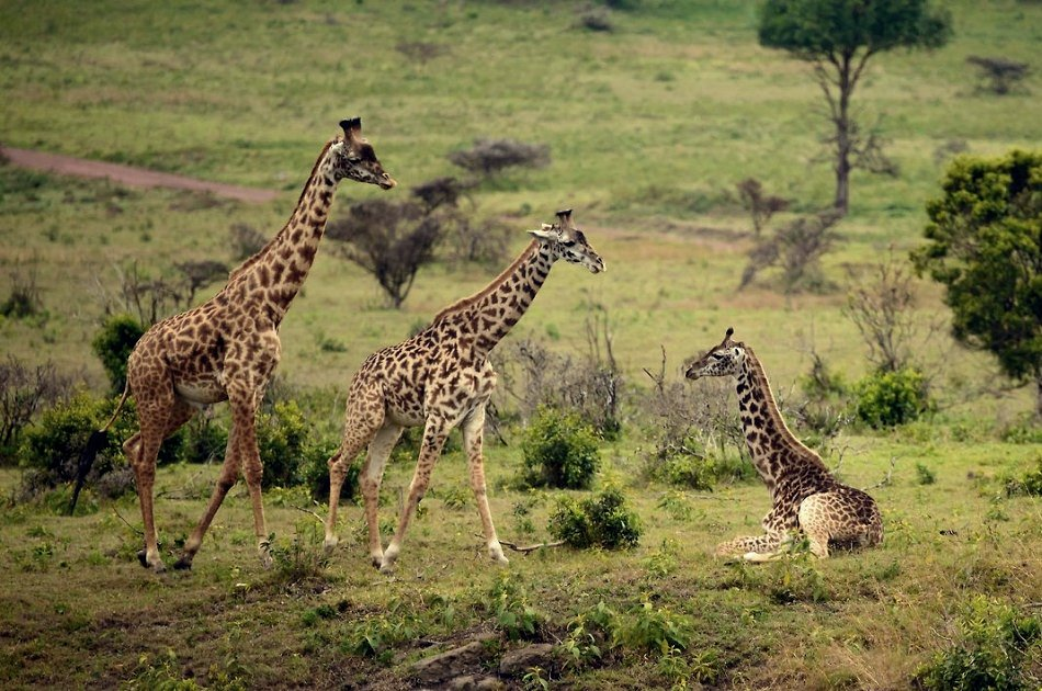 One Day Private Safari to Arusha National Park