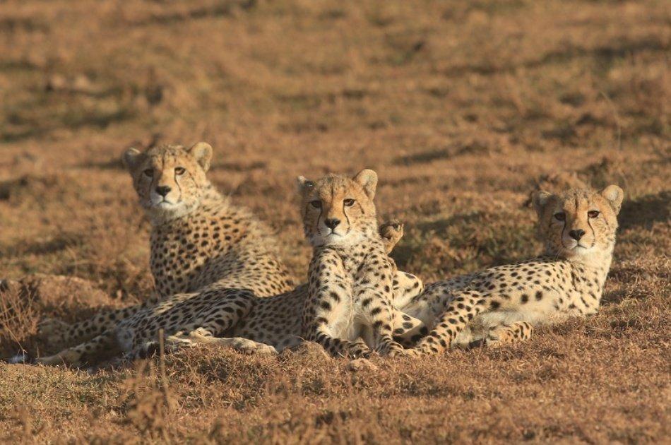 Serengeti Great Migration 10 Day Safari