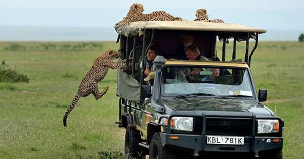 Tanzania 2 Days / 1 Night Safari in Mikumi National Park