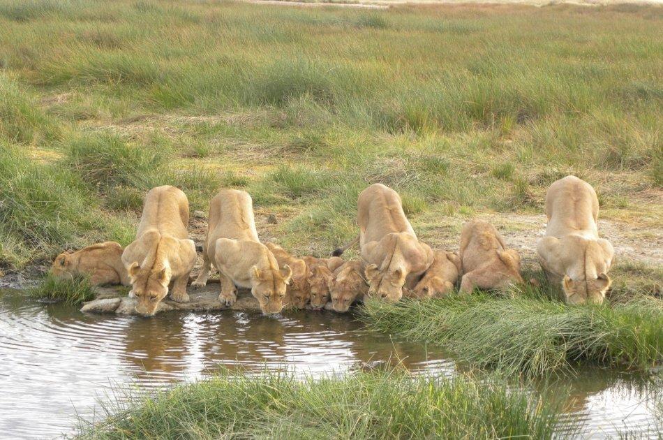Tanzania Wilderness Experience