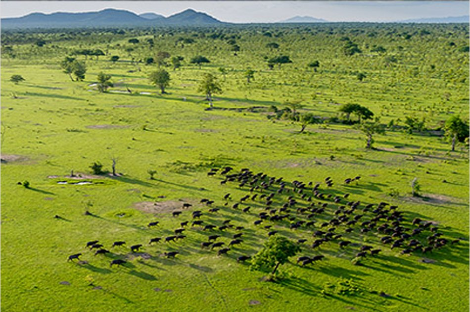 Two Days Selous Game Reserve Safari from Stone Town