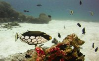 Scuba Diving Experience to the stunning Similan Islands