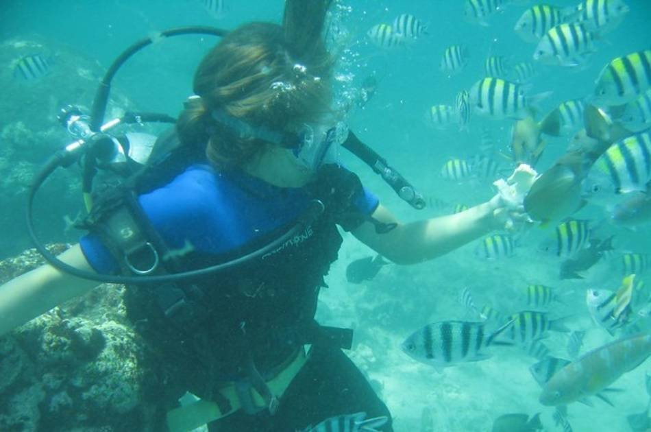 Discover the Colourful Reefs on a Kusadasi Scuba Diving Tour