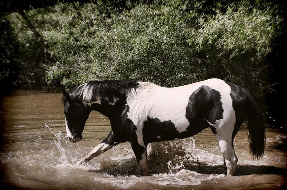 Kusadasi Horse Safari Tour For an Unforgettable Experience